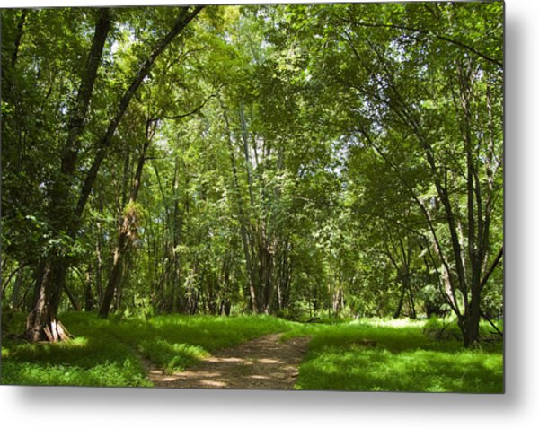 The Road Less Travelled Metal Print