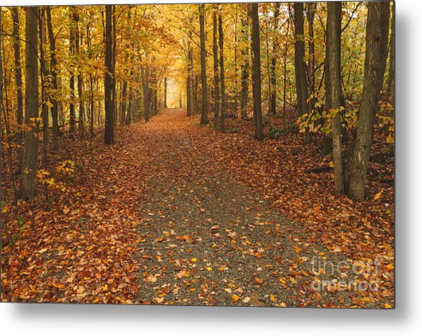 The Road North Metal Print