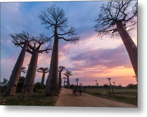 The Road To Morondava Metal Print