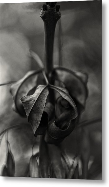 Metal Print featuring the photograph The Rolled Leaf by Andreas Levi