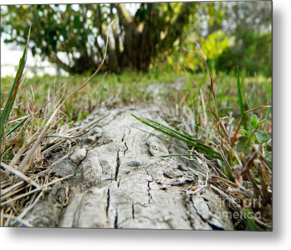 The Root Of Happiness Metal Print