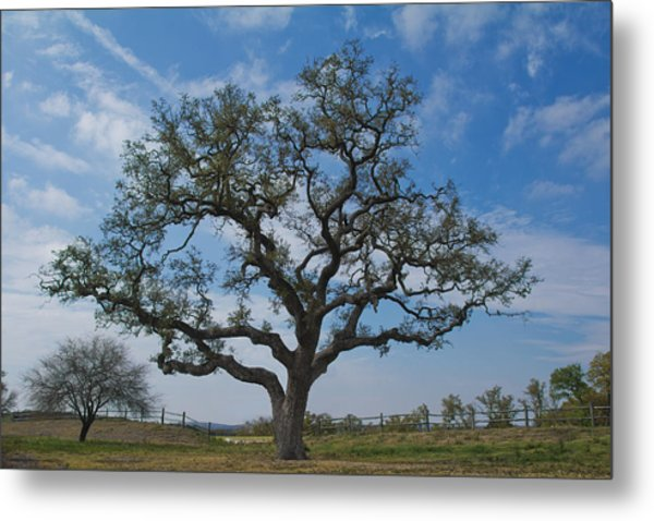 Metal Print featuring the photograph The Sentinel by Jemmy Archer