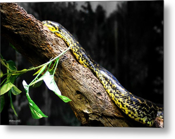 The Serpent Metal Print by Dick Botkin