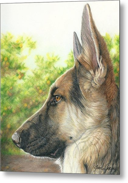 The Shepherd Watching Metal Print