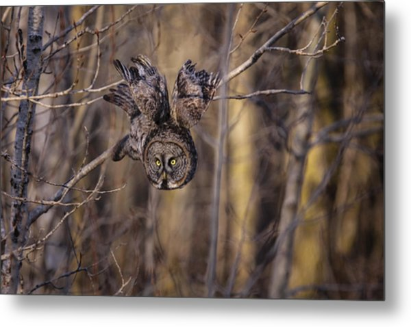 The Silent Hunter Metal Print