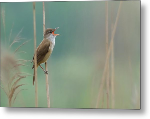 The Singer Of The Reed Metal Print