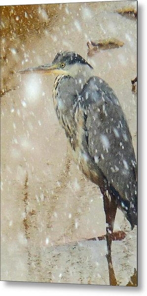 The Snow Bird Metal Print