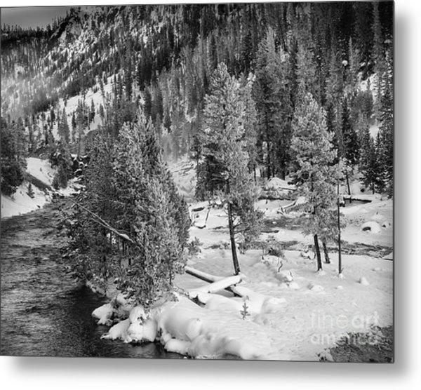 The Snow Tree's Metal Print