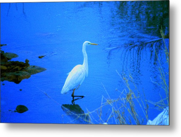 The Snowy White Egret Metal Print