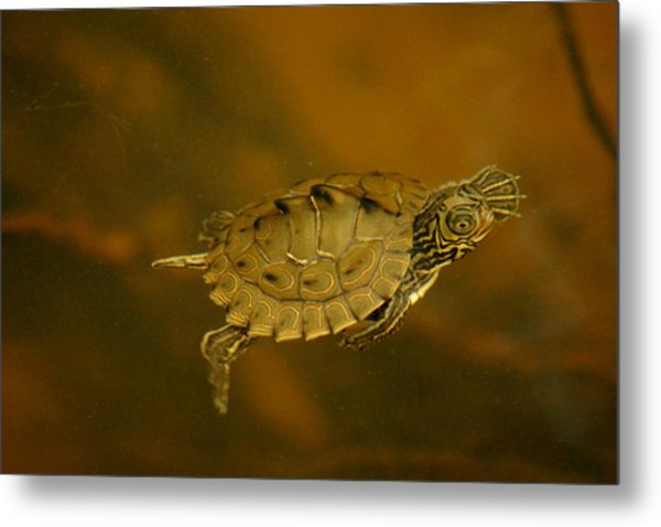 The Southeastern Map Turtle Metal Print