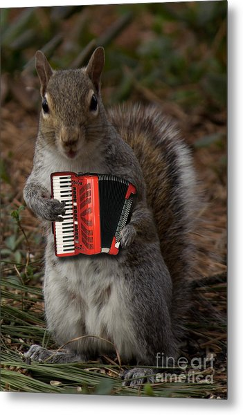 The Squirrel And His Accordion Metal Print