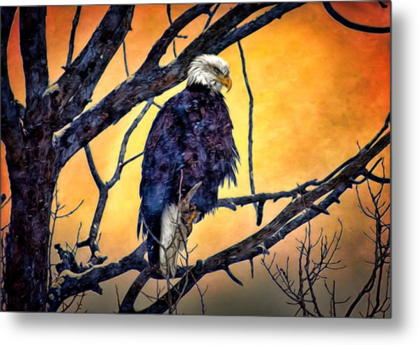 The Staring Eagle Metal Print