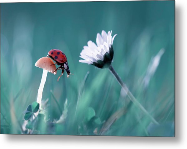 The Story Of The Lady Bug That Tries To Convice The Mushroom To Have A Date With The Beautiful Daisy Metal Print by Fabien Bravin