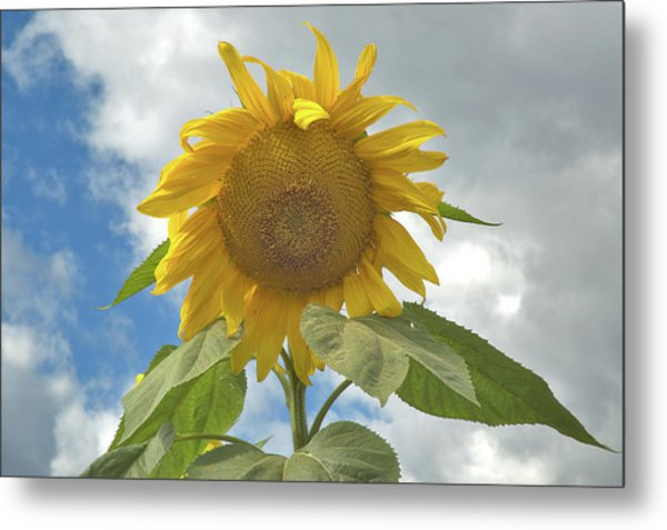 The Sun Is Out Metal Print