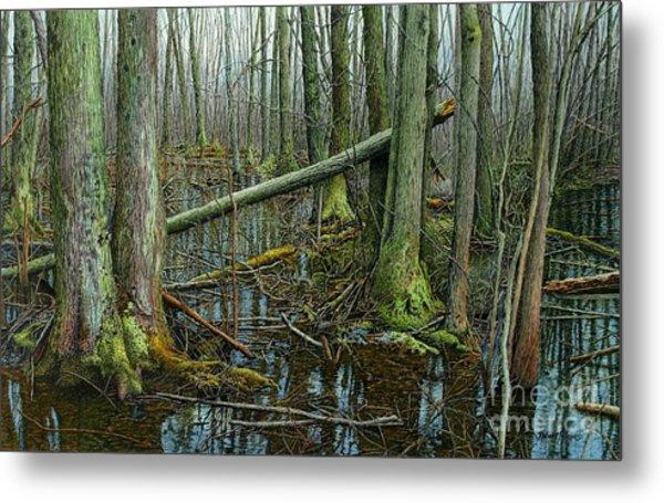 The Swamp 4 Metal Print
