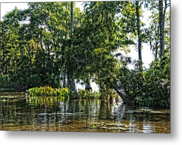 Metal Print featuring the photograph The Swamp by Ralph Jones