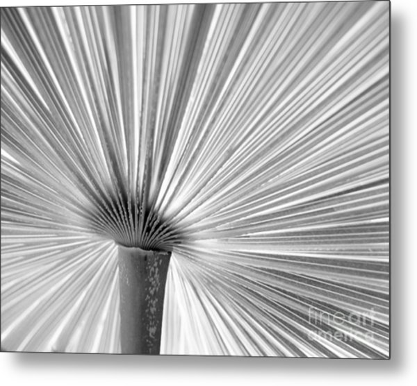 The Symmetry Of Nature Metal Print