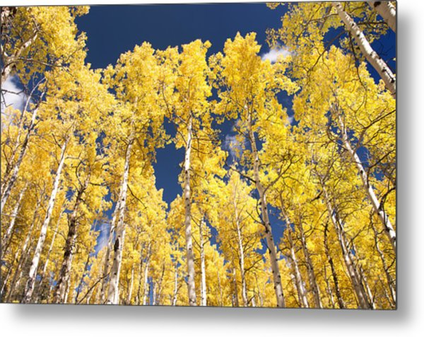 The Tall Ones Metal Print