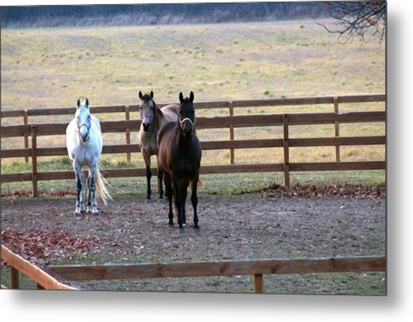 The Three Amigos Metal Print by Rhonda Humphreys