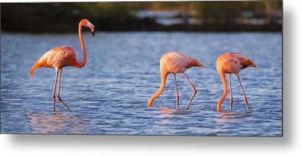 The Three Flamingos Metal Print