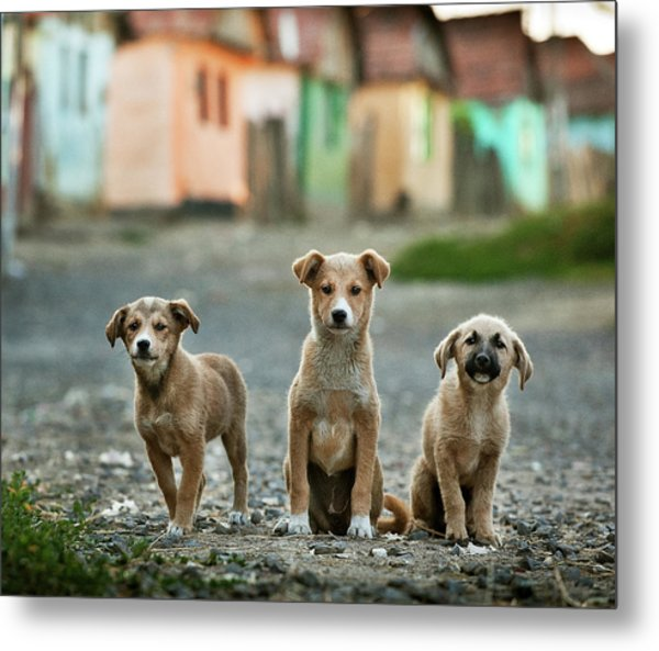 The Three Musketeers Metal Print by Sorin Onisor