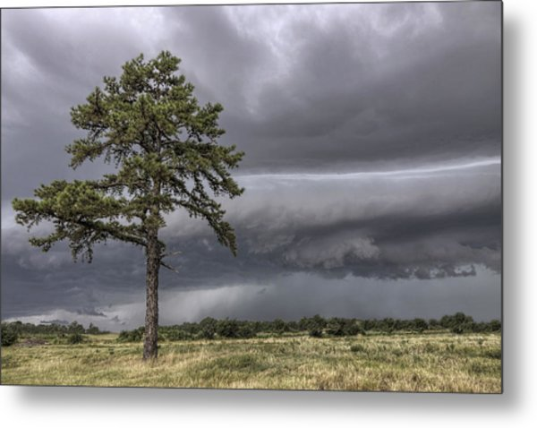 The Thunder Rolls - Storm - Pine Tree Metal Print
