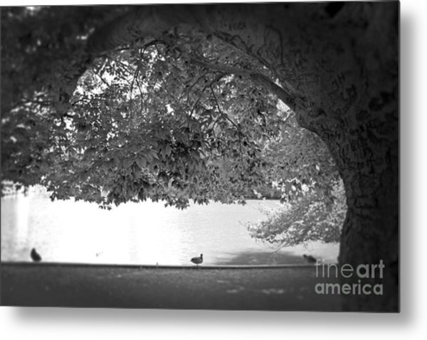 The Tree At Mill Pond Metal Print