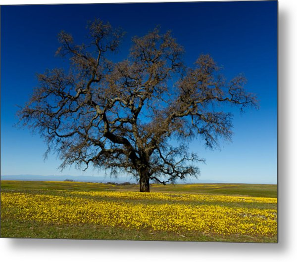 The Tree On Table Mountain Metal Print