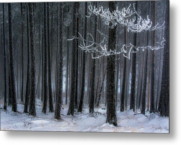 The Trees Has Horns Metal Print