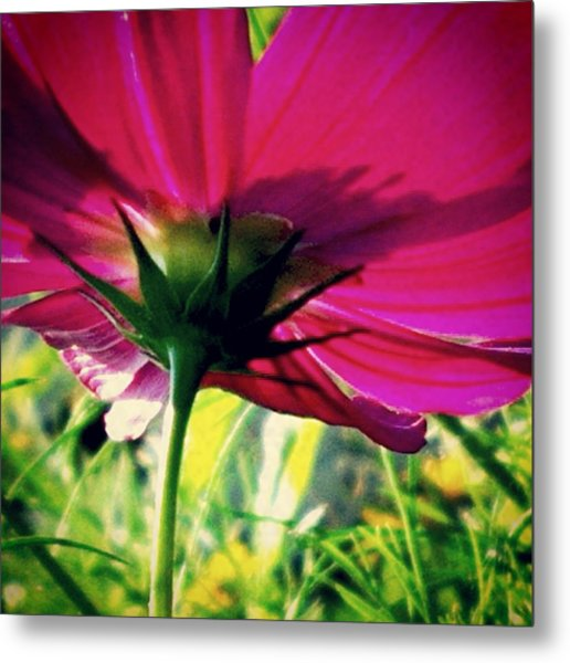 The Under Side Of Life Metal Print