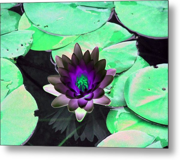 The Water Lilies Collection - Photopower 1113 Metal Print