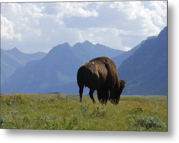 The West - Mountains And Wildlife Metal Print by Clay and Gill Ross