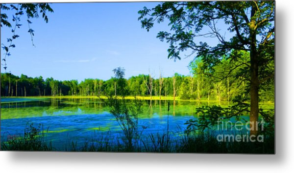 The Wetlands At Potato Creek Metal Print