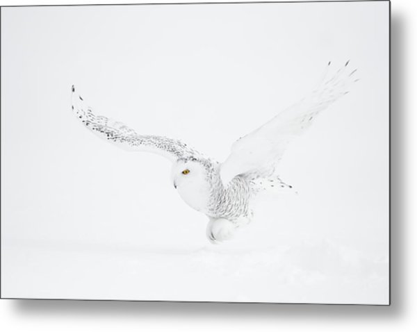 The White Ghost Is Coming Metal Print by Marco Pozzi