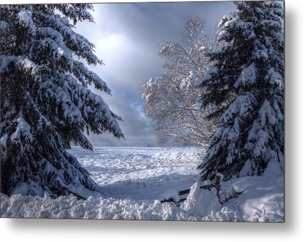 The Winter Pathway Metal Print