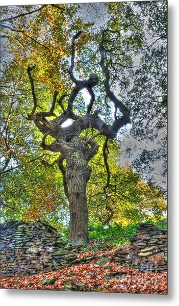 The Witches Tree Metal Print