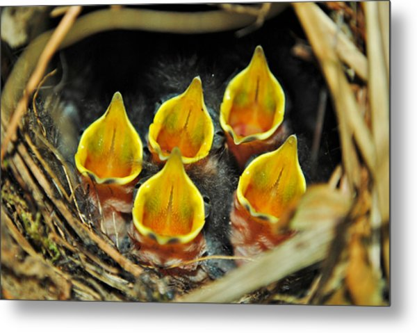 The Wren Quintet Metal Print