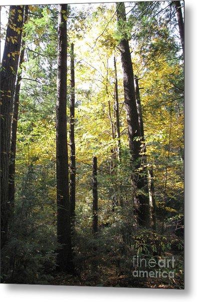 The Yellow Wood Metal Print