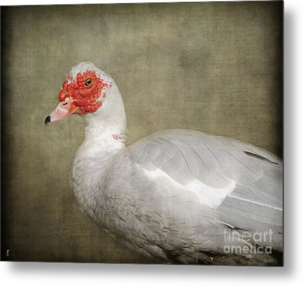 They Call Me A Redhead - Muscovy Duck Metal Print