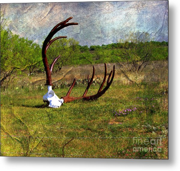 They Grow Them Big In Texas Metal Print