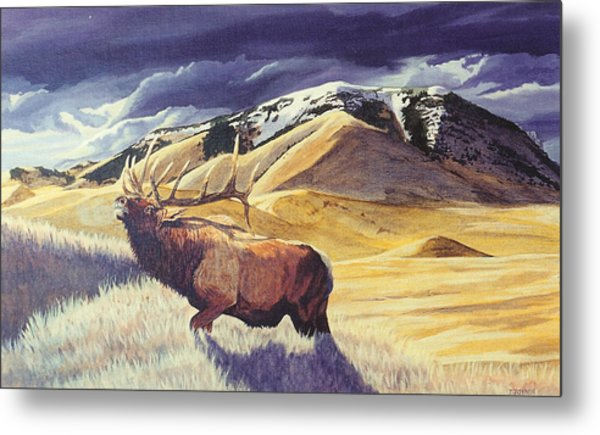 Theyre Bugling On West Butte Metal Print