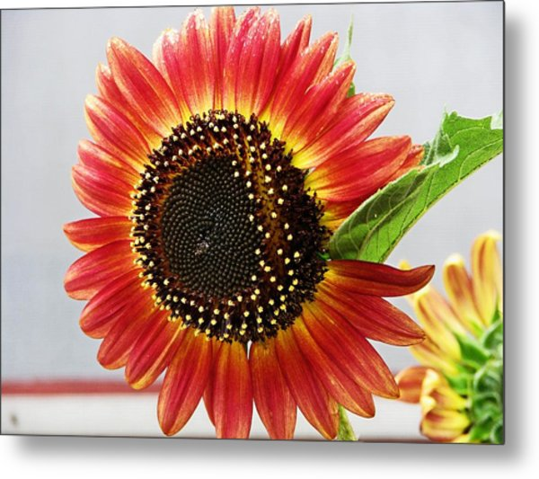 Thinking Summer Metal Print by Victoria Sheldon