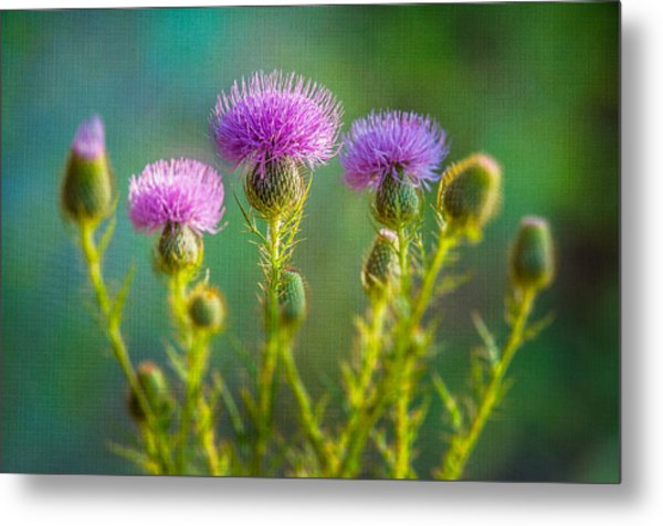 Thistle In The Sun Metal Print