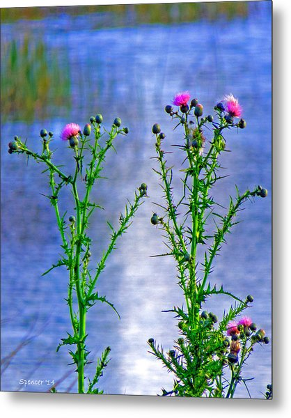 Thistle Metal Print by T Guy Spencer