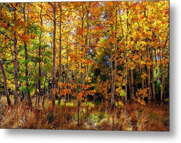 Thomas Creek Fall Color Metal Print