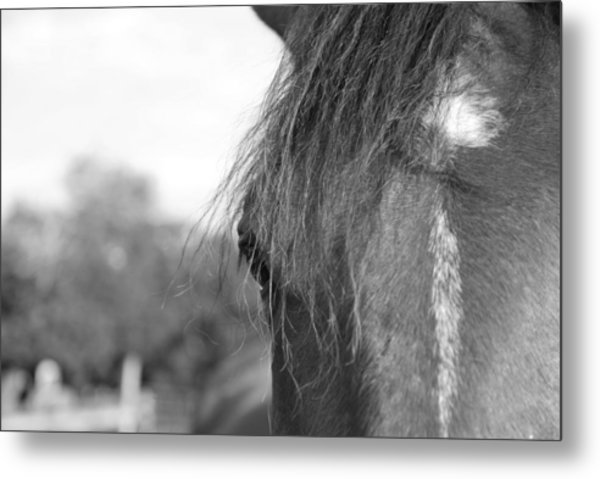 Thoroughbred B/w Metal Print