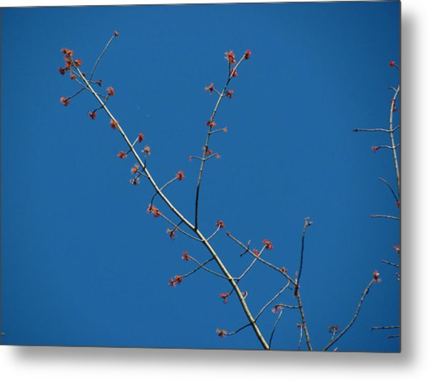 Threads And Buds Metal Print