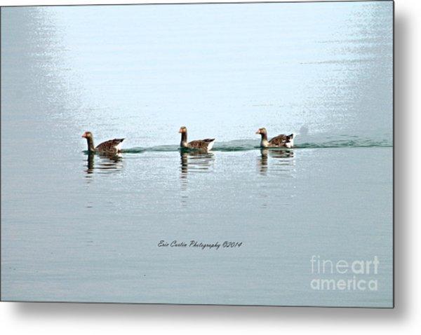 Three Geese A Swimmin Metal Print by Eric Curtin
