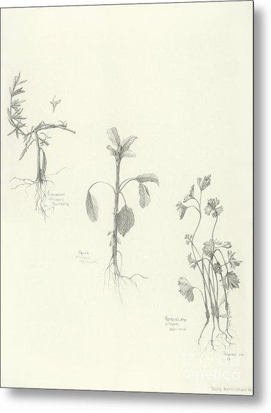 Three Herbs Metal Print