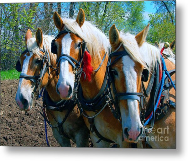 Three Horses Break Time  Metal Print